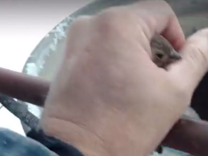 Der Mann legt seine wärmende Hand behutsam um den Vogel.