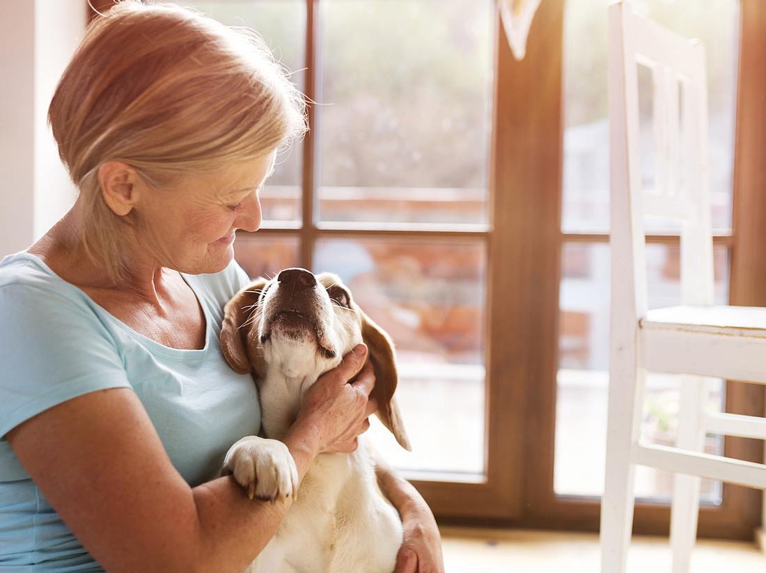 Ältere Tiere – Darauf sollten Sie bei Ihren Haustieren achten