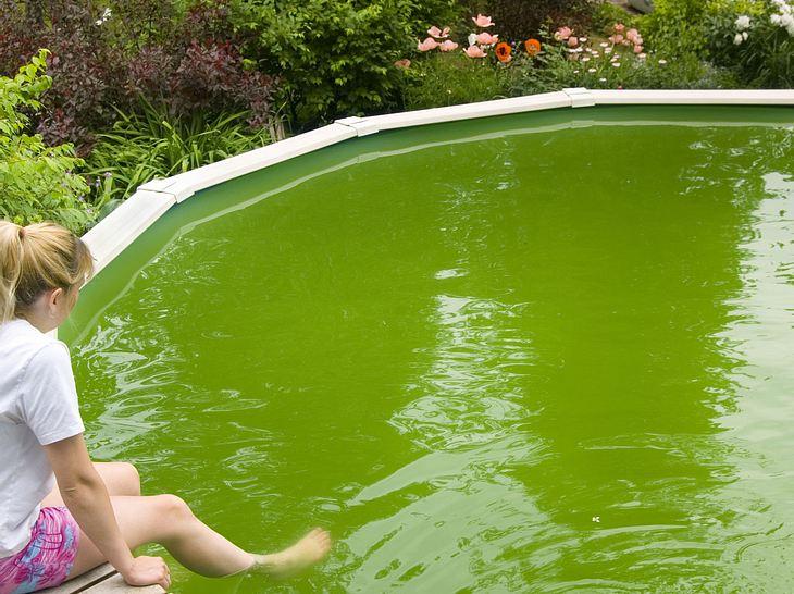 Wie Sie Algen in Ihrem Pool richtig entfernen.