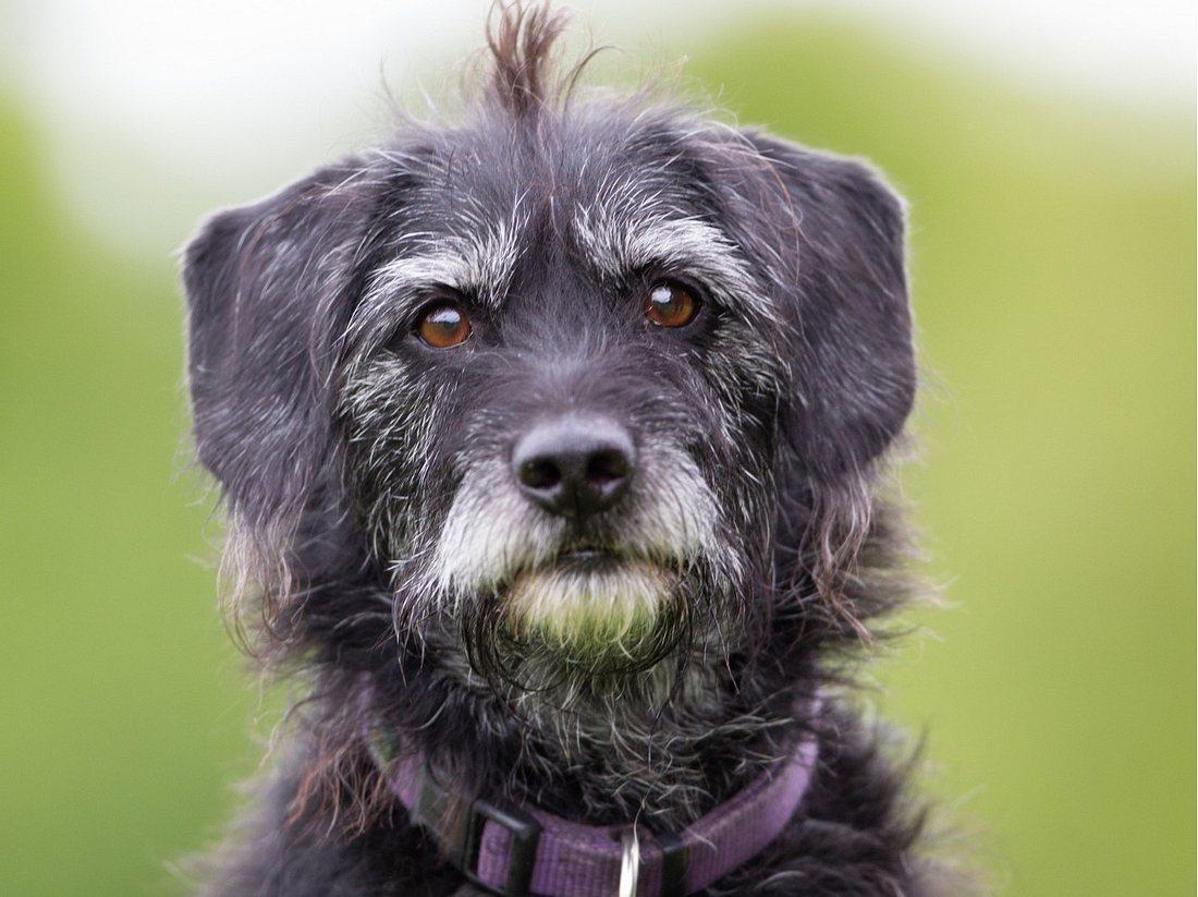 Gesund-Tipps für alte Hunde