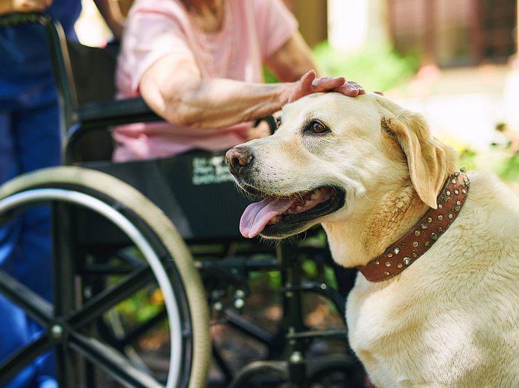 Der Kontakt mit Tieren hilft Alzheimer-Patienten