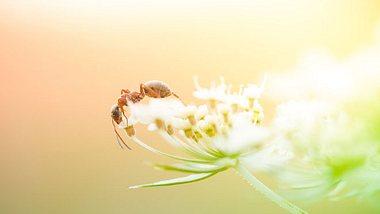 Ameisensäure: 6 Beschwerden, die Sie damit behandeln können - Foto: pawel.gaul/ iStock