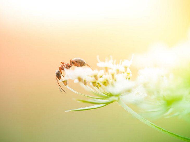 Ameisensäure: 6 Beschwerden, die Sie damit behandeln können