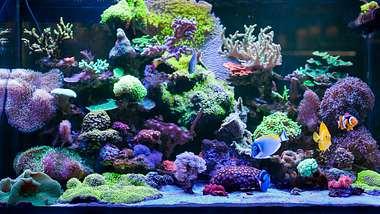 Buntes Aquarium - Foto: iStock/Tgordievskaya