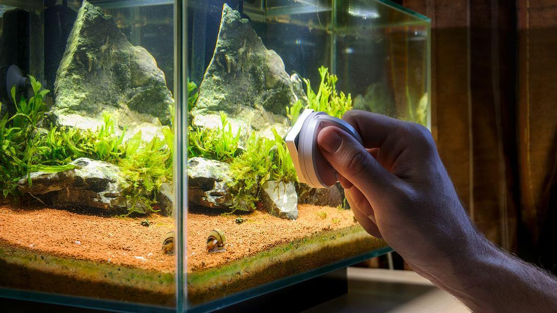 Aquarium reinigen: Anleitung und Tipps für Einsteiger