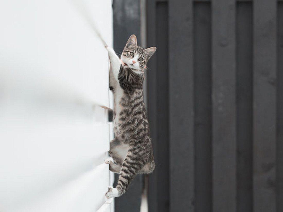Mit diesem Zaunaufsatz bleibt die Katze sicher