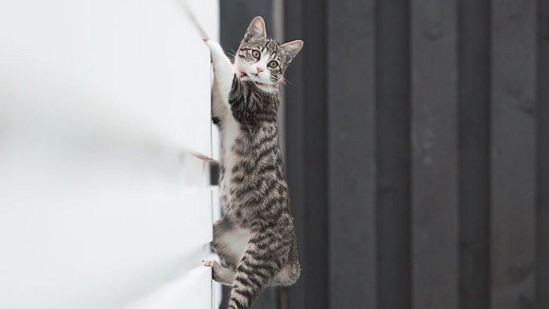 Zaunaufsatz für Katzen. - Foto: stock_colors / iStock