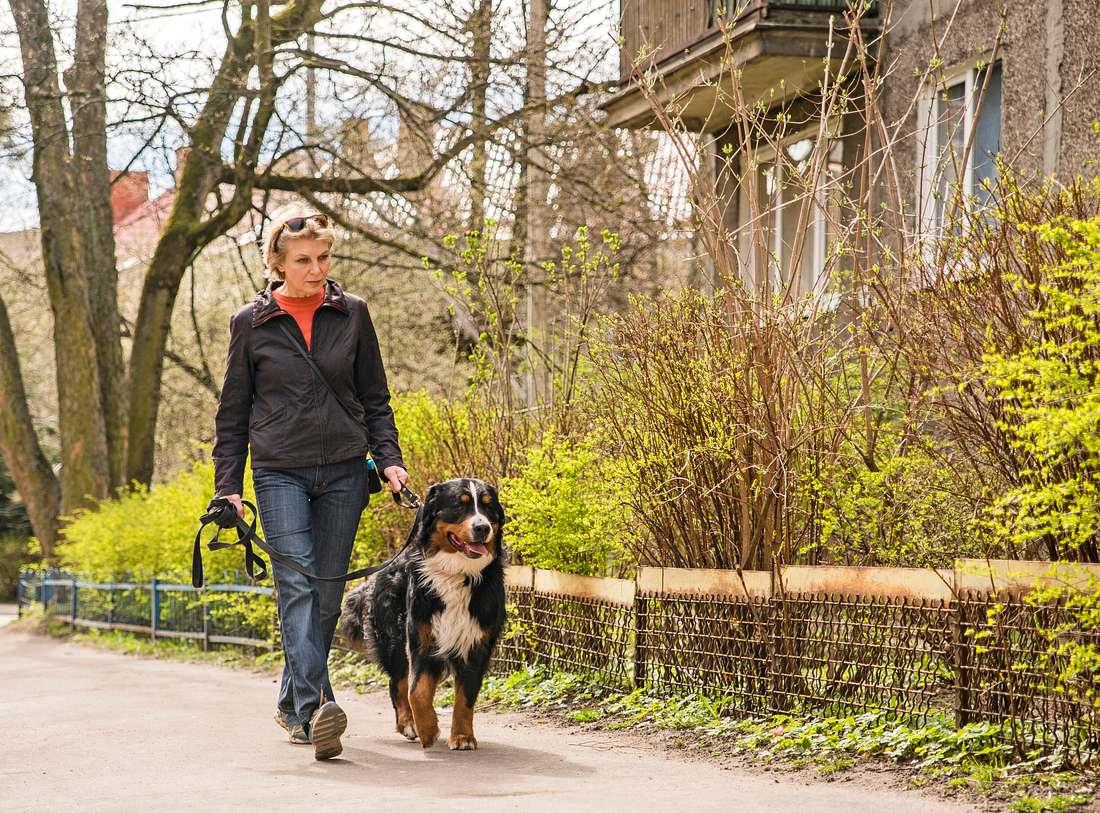 Wäre es bei einer Ausgangssperre anlässlich des Coronavirus erlaubt, mit dem Hund rauszugehen?