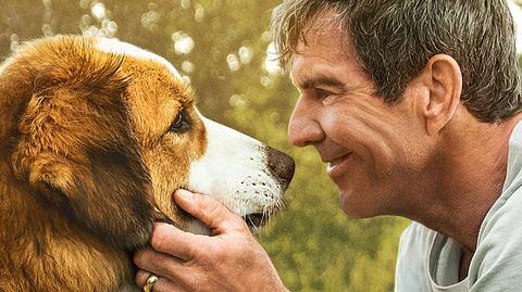 Hundeexperte Peter Herberth im Gespräch