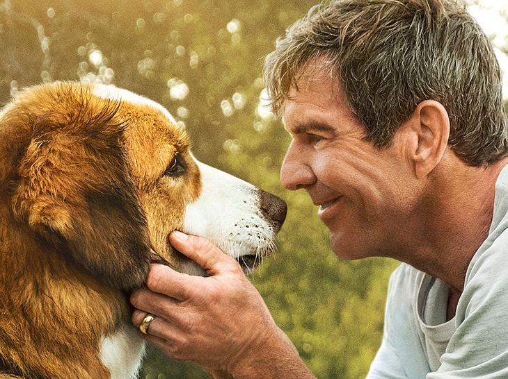 Bailey - Ein Hund kehrt zurück - Filmplakat