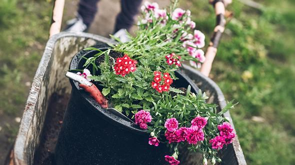 Balkon- und Garten: Diese Kübelpflanzen sind winterhart