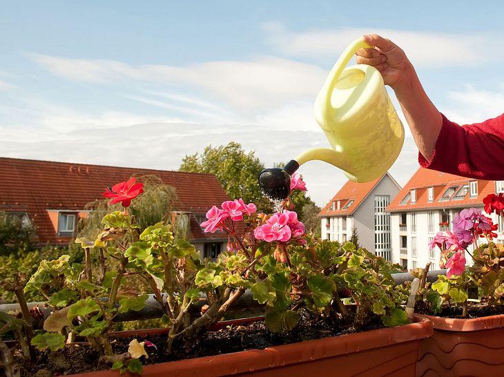 Von Bepflanzung bis Bewässerung: Mit diesen Tipps halten Ihre Balkonblumen länger.