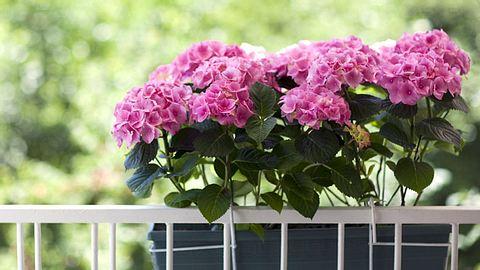 Welche Balkonpflanzen eignen sich für welchen Standort? - Foto: Kursad / iStock