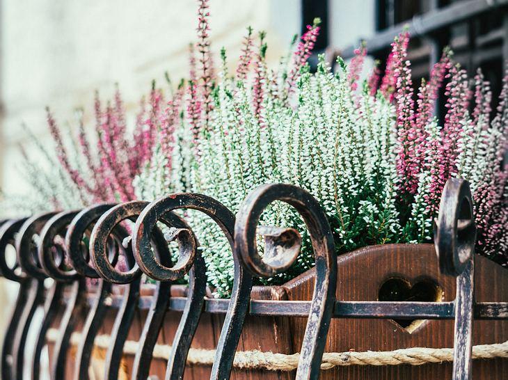 So überwintern Balkonpflanzen