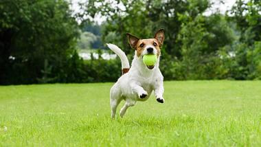 Ballwurfmaschine Hunde - Foto: iStock/alexei_tm