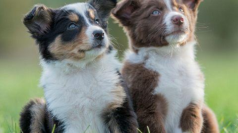 Beliebte Hundenamen von A bis N, die Sie kennen sollten - Foto: FatCamera / iStock