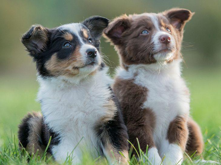 Beliebte Hundenamen von A bis N, die Sie kennen sollten
