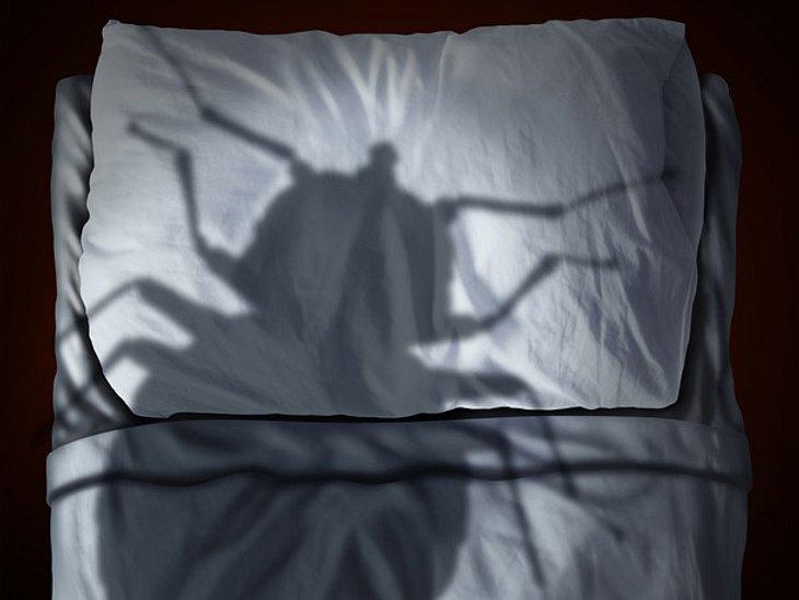 Bettwanzen: Das können Sie gegen die Schädlinge tun