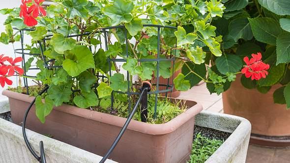 Bewässerungssystem Balkon - Foto: iStock/AleMasche72