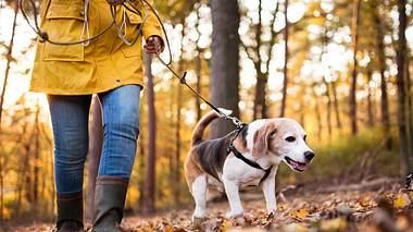 Bewegung ist Lebensqualität – Warum Bewegung auch für unsere Tiere so wichtig ist  - Foto: iStock // Halfpoint