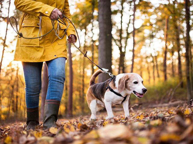Bewegung ist Lebensqualität – Warum Bewegung auch für unsere Tiere so wichtig ist