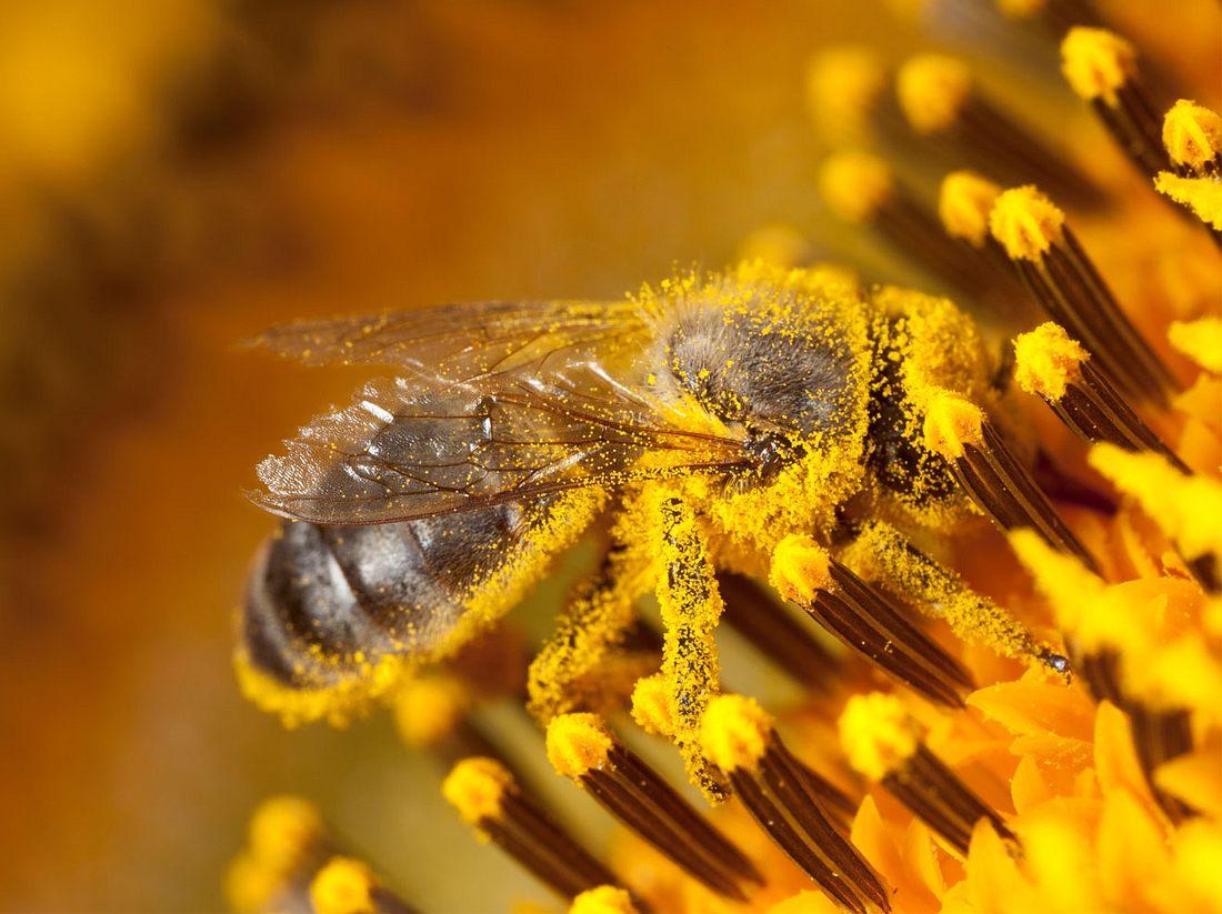 Bienen-Volksbegehren in Bayern