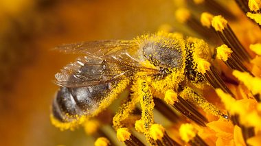 Bienen-Volksbegehren in Bayern - Foto: JLGutierrez / iStock