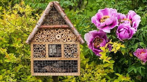 Bienenhotel bauen für Garten und Balkon - Foto: iStock/fotomem