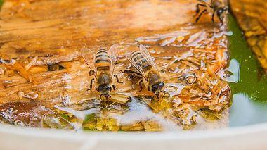 Bienentränke selber bauen - Foto: kostik2photo / iStock