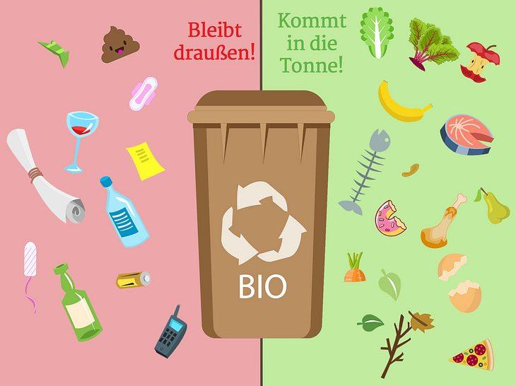 Was darf in die Biotonne, was nicht?