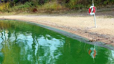 Blaualgen im See: Wann Cyanobakterien gefährlich werden
