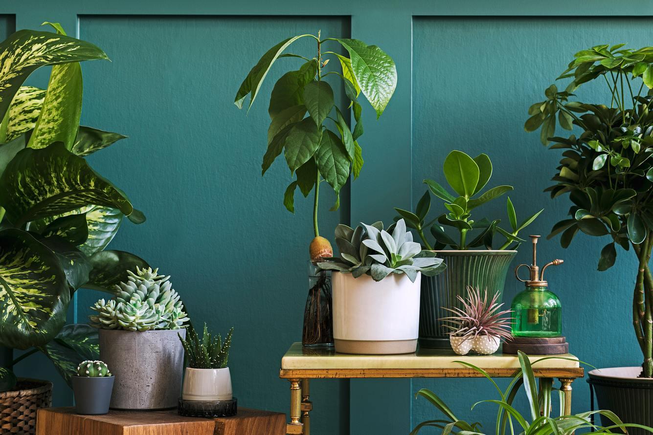 Verschiedene Blumentöpfe vor blauer Wand