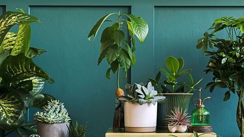 Verschiedene Blumentöpfe vor blauer Wand - Foto: iStock/FollowTheFlow