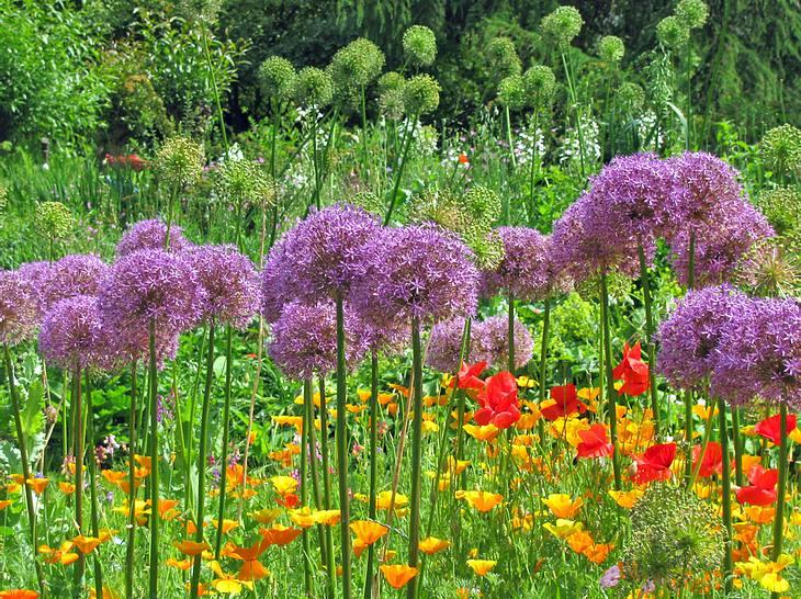 Mit Blumenzwiebeln lassen sich tolle Farbspiele im Garten erzielen.
