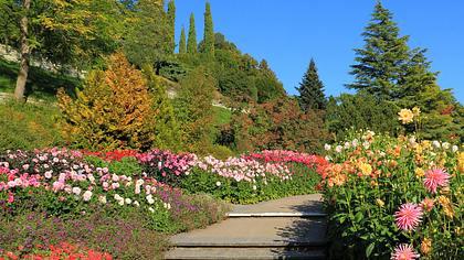 Blumeninsel Mainau im Herbst