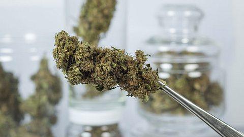 Zahl der Cannabis-Verordnungen stark gestiegen