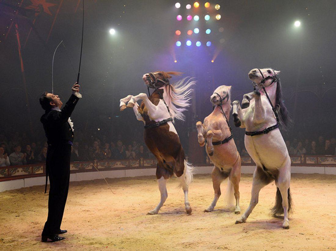 Ab 2018 gibt es keine Tier-Nummern mehr im Circus Roncalli.