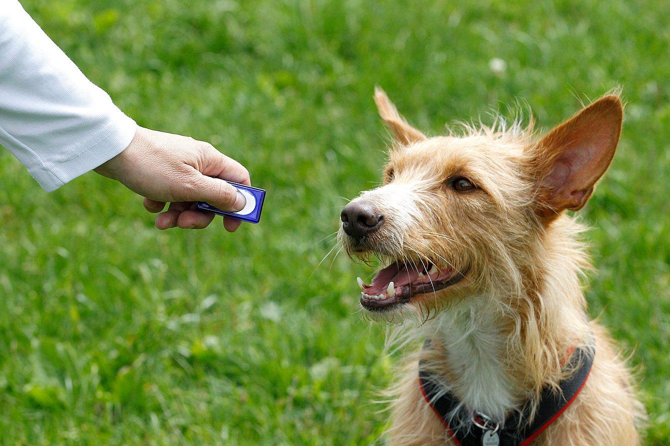 Das Geräusch des Clickers signalisiert dem Hund, dass er es etwas richtig macht.