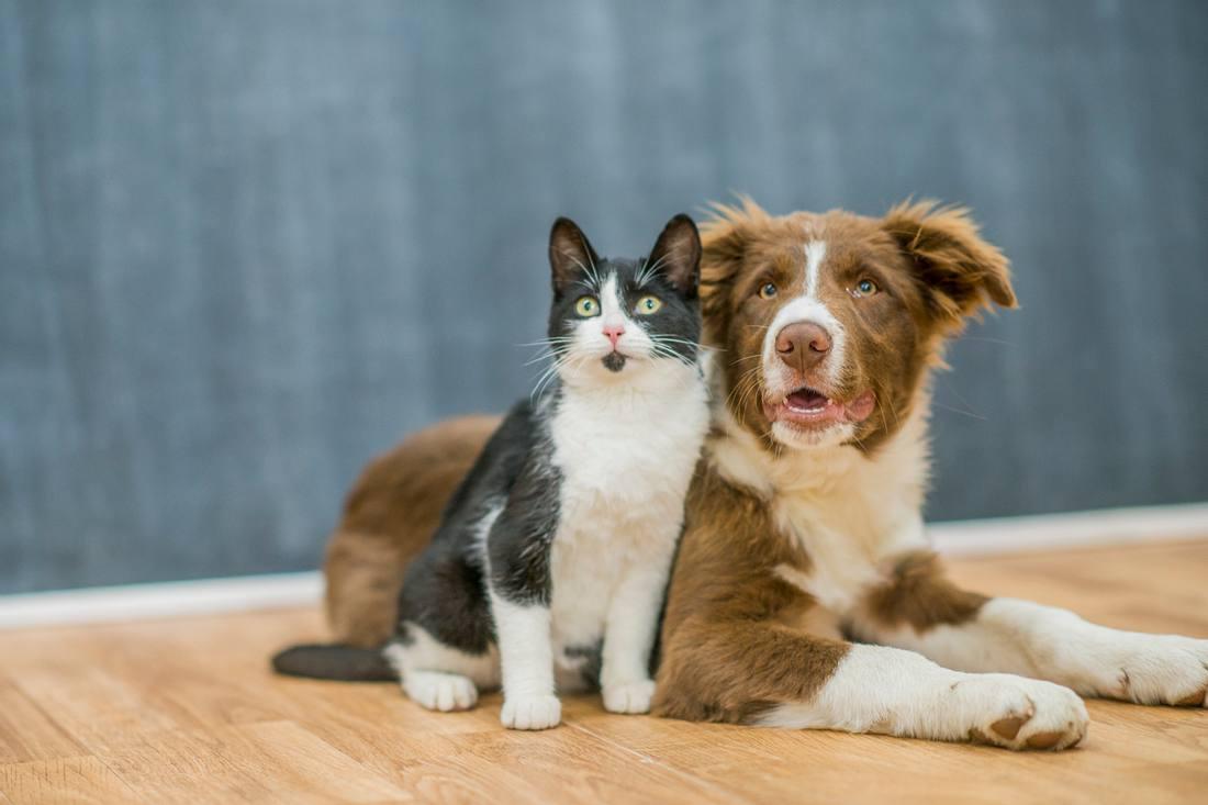 Inwieweit betrifft das Coronavirus Haustiere wie Hunde und Katzen?
