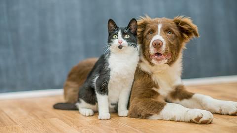 Inwieweit betrifft das Coronavirus Haustiere wie Hunde und Katzen? - Foto: FatCamera / iStock