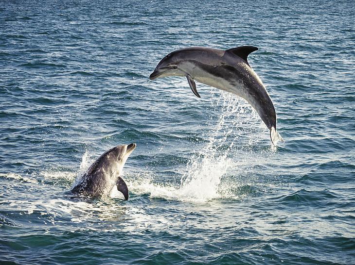 Zauberhafte Meeresbewohner: Wie Delfine sich selbst heilen