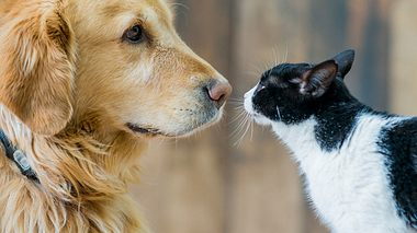 Demenz bei Haustieren