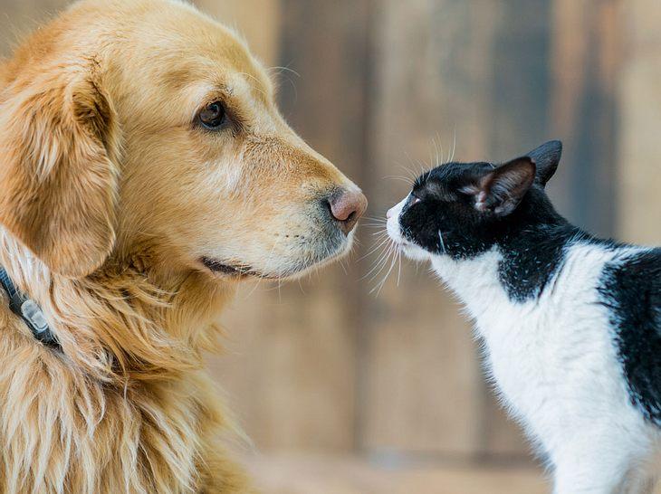 Auch Hunde und Katzen können an Demenz erkranken.