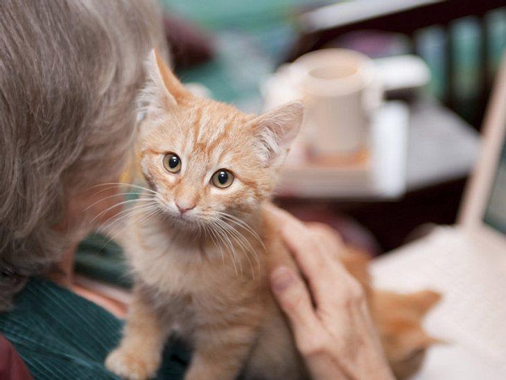 Süß: Demenzerkrankte kümmern sich um Pflegekätzchen.