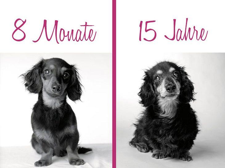 Dog Years: Ein Bildband voller Hundeleben