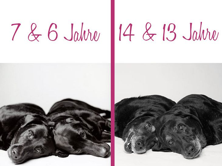 Dog Years: Maddie und Elle, die Labrador Retriever