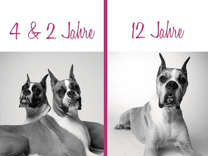 Dog Years: Winston musste sich von Lola verabschieden