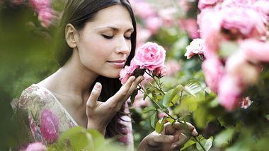 Duftrosen für Balkon und Garten