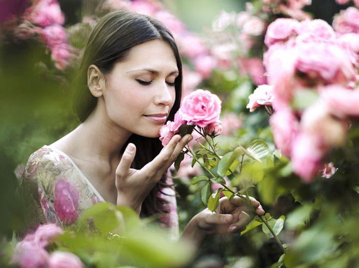 Duftrosen verströmen einen besonders angenehmen Geruch.