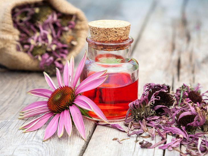 Echinacea-Tinktur selber herstellen: So geht es